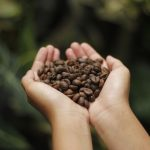 Coffee farmers look to be winners in this ongoing pandemic